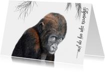 Dierenkaarten Adjibolo de aap