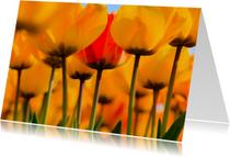 Zomaar kaarten - Gele tulpen in bloei