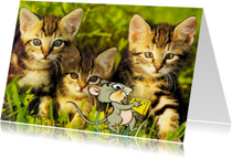 Grappige dierenkaart 3 katten met muisje
