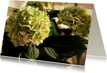 Condoleancekaarten - groene hortensia