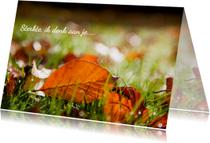 Sterkte kaarten - herfstblad in het gras