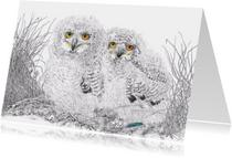 Kunstkaarten - Jonge oehoes