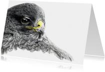 Kunstkaarten - Pentekening 'Buizerd'