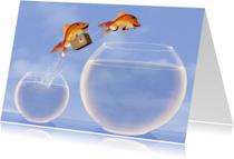 Verhuiskaarten - Springende vissen met verhuisdoos