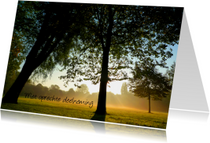 Condoleancekaarten - Stemmige bomen