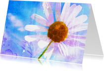 Sterkte kaarten - Sterkte Kaart Margrietje In Kleur
