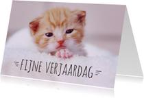 Verjaardagskaart Kitten