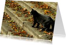 Dierenkaarten - Zwarte kat met herfstbladeren