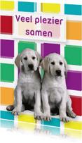 Dierenkaarten - 2 honden samen - Remco