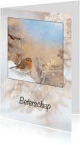 Beterschapskaarten - Beter met winterroodborst