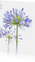 Bloemenkaarten - Blauwe Agapanthus origineel