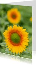 Bloemenkaarten - Bloeiende zonnebloemen