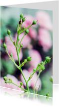Condoleancekaarten - bloem pink rose