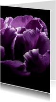 Bloemenkaarten - bloemkaart, tulp paars