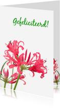 Felicitatiekaarten - Felicitatie roze&wit