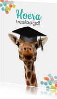 Geslaagd kaarten - Geslaagd giraf met vierkante hoed