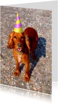 Dierenkaarten - Happy dog