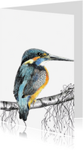 Kunstkaarten - Ijsvogeltje