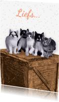 Dierenkaarten - Katten op krat - Remco