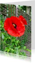 Bloemenkaarten - Klaprozen voor hek