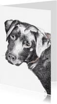 Dierenkaarten - Labrador