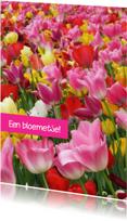 Bloemenkaarten - Lente tulpen bont gekleurd OT