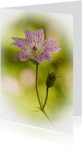 Condoleancekaarten - Lila-wit bloempje met verloop