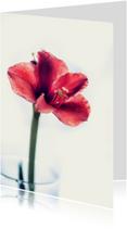 Liefde kaarten - my pretty flower