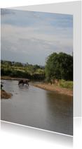 Dierenkaarten - Olifanten Kenia