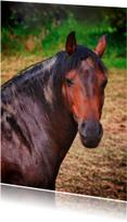 Dierenkaarten - paard in de wei