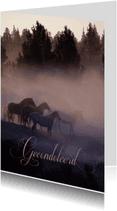 Condoleancekaarten - Paarden in de mist-isf