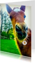 Dierenkaarten - Paardenkaart met bloemetje