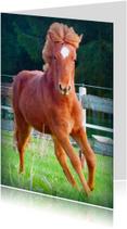 Dierenkaarten - Paardenkaart Pony in galop