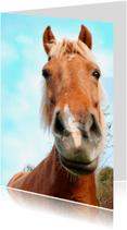 Dierenkaarten - Paardenkaart Voskleurige Pony