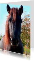 Dierenkaarten - Paardenkaart Zwarte Pony