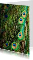 Dierenkaarten - Pauwenveren
