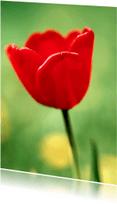 Bloemenkaarten - Rode Tulp - BK