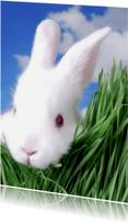 Dierenkaarten - Schattige konijn kaart - Remco