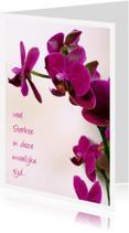 Condoleancekaarten - sterkte orchidee paars