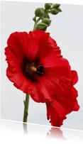 Bloemenkaarten - Stokroos met Bij