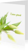 Zomaar kaarten - Tulpen in knop