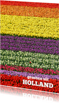 Vakantiekaarten - Tulpen kleurenpalet - bloemenkaart