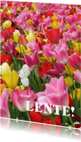 Bloemenkaarten - Tulpen - Lente