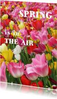 Bloemenkaarten - Tulpen multicolor - Spring is in the air - OT