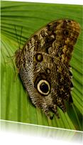 Dierenkaarten - Uilvlinder