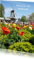Vakantiekaarten - vakantie Hollandse molen