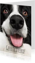 Verjaardagskaarten - Verjaardagskaart Hond
