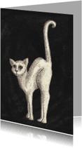 Dierenkaarten - WhiteCat