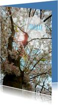 Zomaar kaarten - Zomaar bloesemboom