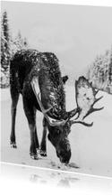 Kerstkaart met eland in de sneeuw